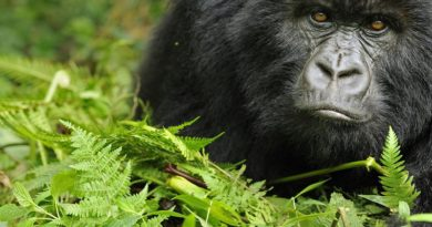 Luxembourg pledges €9m to help save mountain species