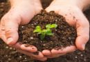 World Soil Day: Why healthy soils are important to 2030 Agenda, Paris goals