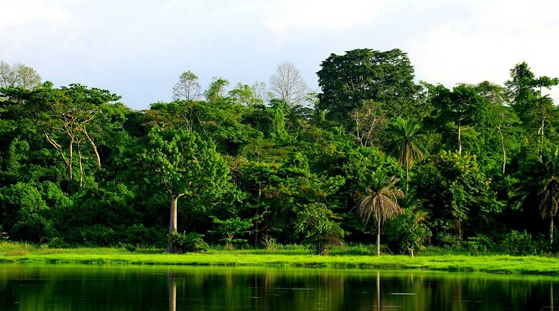 Indonesia's last frontier: indigenous peoples' rights key to forest preservation