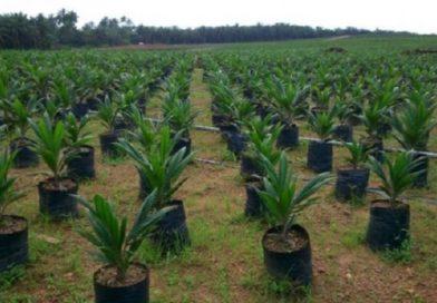 Climate Change: Ebonyi govt to plant 5million trees